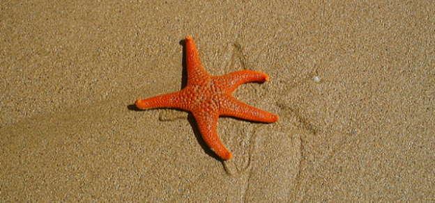 Who is your starfish